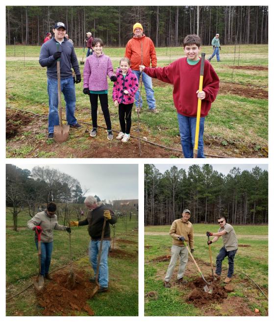 85 New Apple Trees Thanks to Volunteers!