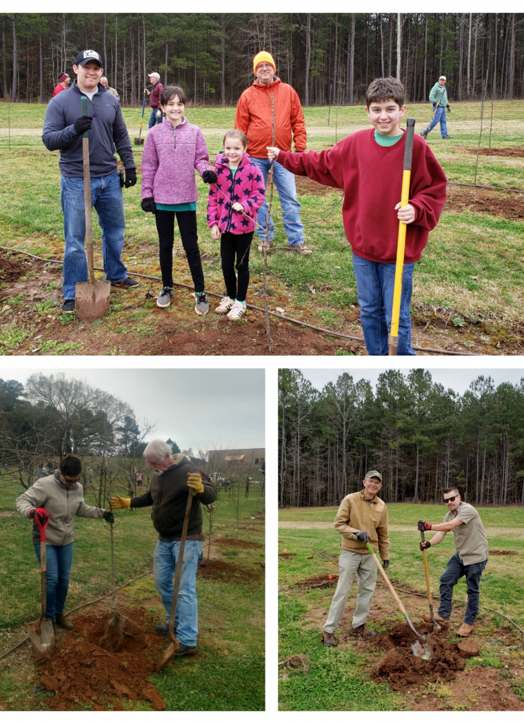 85 New Apple Trees Thanks to Volunteers!